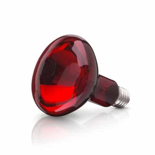 Bóng đèn hồng ngoại Philips/ osram100w